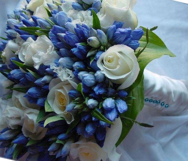 bridal bouquet hydrangea plant